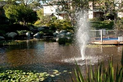 Rental For Rent: 12205 Carmel Vista #141