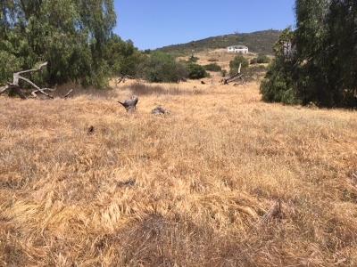 Vista Residential Lots & Land For Sale: Via Conca D'oro #50