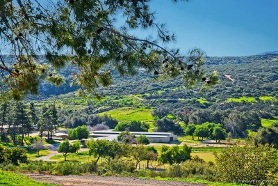 Riverside County, San Diego County Single Family Home For Sale: 25279 Creek Hollow Drive