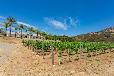 Single Family Home For Sale: 3189 Jamul Highlands