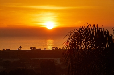 Carlsbad Attached For Sale: 914 Caminito Madrigal #F