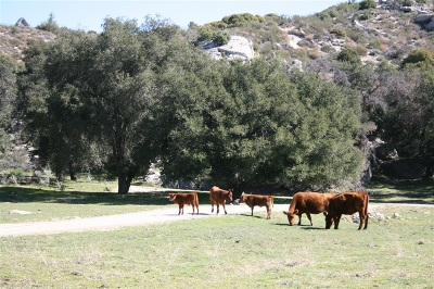 San Diego County Residential Lots & Land For Sale: 1973 Campo Truck Trail