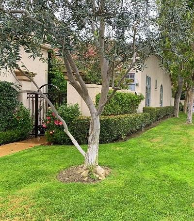 Rancho Santa Fe Rental For Rent: 3606 Calle Juego