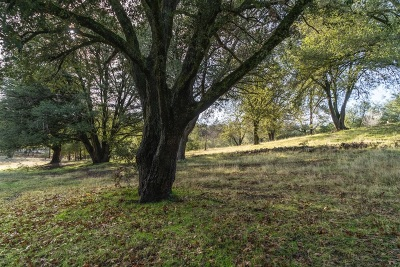 Julian Residential Lots & Land For Sale: Pine Hills Rd. #58