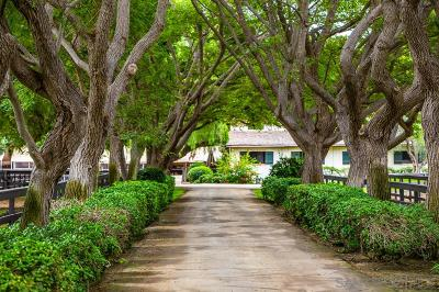 San Diego County Residential Lots & Land Pending: 16147 Via De Santa Fe