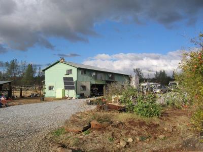 Shingletown Single Family Home For Sale: 26470 Aslan Rd.