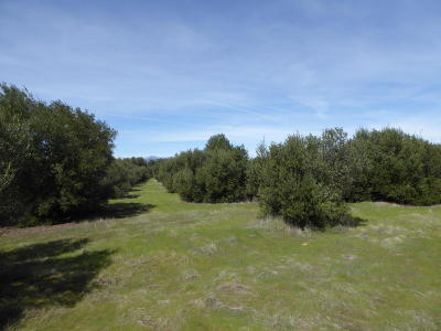 Anderson Residential Lots & Land For Sale: Sara Jane Ln