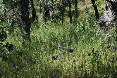 Red Bluff Residential Lots & Land For Sale: Lot 30 Tract 91-1004 Eagle Valley Ct
