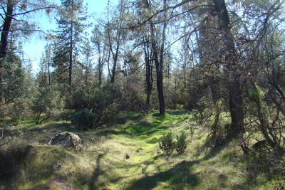Residential Lots & Land For Sale: Placer Rd.