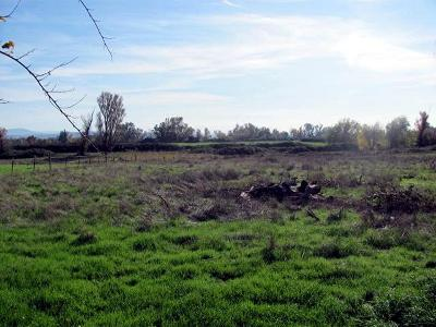 Residential Lots & Land For Sale: 5.5 ac. Webb Rd
