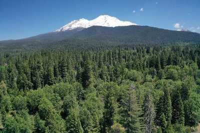 Mt Shasta Residential Lots & Land For Sale: Lot 1 Quail Hill Dr.