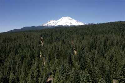 Mt Shasta Residential Lots & Land For Sale: 23 Acres Off Highway 89