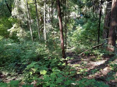 Mt Shasta Residential Lots & Land For Sale: 3 Acres N Old Stage Road