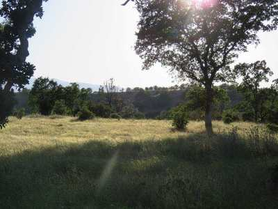 Red Bluff Residential Lots & Land For Sale: 1111 Vestal Road