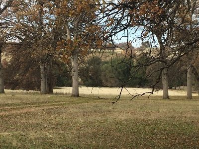 Red Bluff Residential Lots & Land For Sale: 19656 Reeds Creek Road