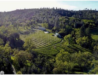 Groveland Single Family Home For Sale: 12221 Deer Creek Road