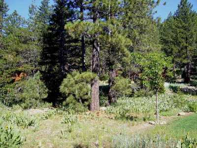 Residential Lots & Land For Sale: 235 Shoshone Way