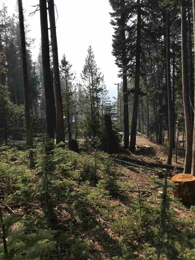Residential Lots & Land For Sale: 6115 Cascade Road