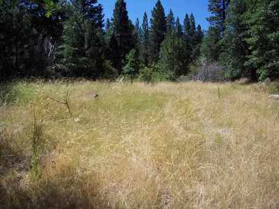 Residential Lots & Land For Sale: 462075 Silent Oak Drive