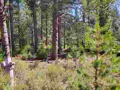 Residential Lots & Land For Sale: 11861 Bottcher Loop