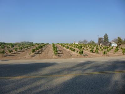 Porterville Residential Lots & Land For Sale: S Plano Street