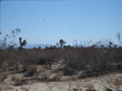 Victorville Residential Lots & Land For Sale: Monte Vista (Aster) Road