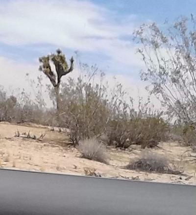 Adelanto Residential Lots & Land For Sale: Chamberlaine Avenue