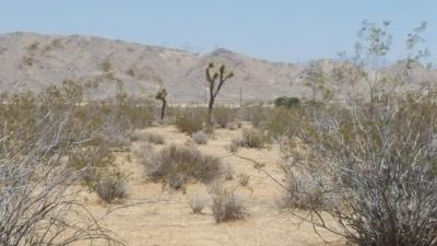 Lucerne Valley Residential Lots & Land For Sale: Bulrush Road