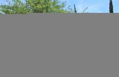Hesperia Single Family Home For Sale: 16145 Live Oak Street