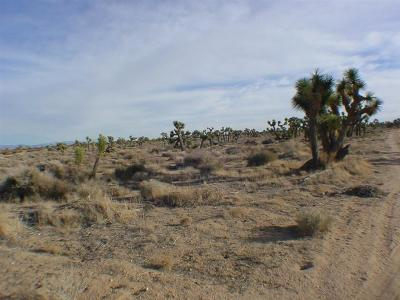 Phelan Residential Lots & Land For Sale: Arizona Avenue