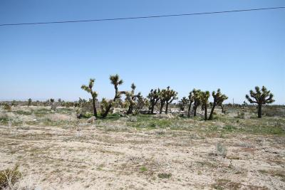 Phelan CA Residential Lots & Land For Sale: $40,000