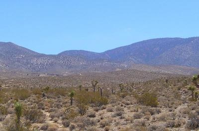 Lucerne Valley Residential Lots & Land For Sale: Bauer Road