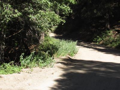 Cedarpines Park CA Residential Lots & Land For Sale: $8,888