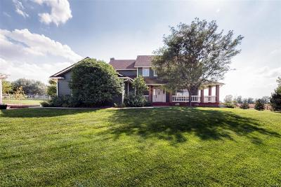 Adams County Single Family Home Under Contract: 16841 East 116th Court