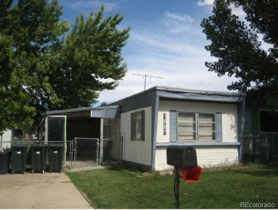 Dacono Single Family Home Active: 1007 Glen Creighton Drive
