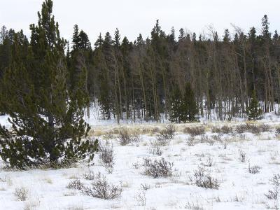 Fairplay CO Residential Lots & Land Active: $30,000