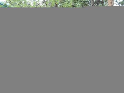 Woodland Park Single Family Home Active: 625 Sunny Glen Court