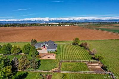 Longmont Single Family Home Active: 1873 Blue Mountain Road