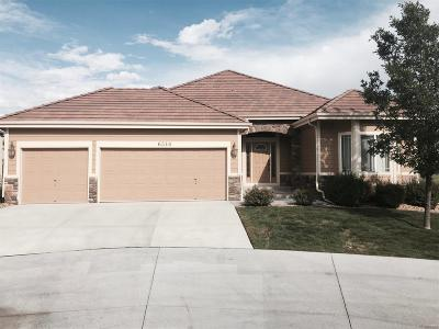 Arvada Single Family Home Under Contract: 6516 Umber Circle