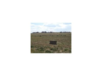 Elbert CO Residential Lots & Land Active: $240,000