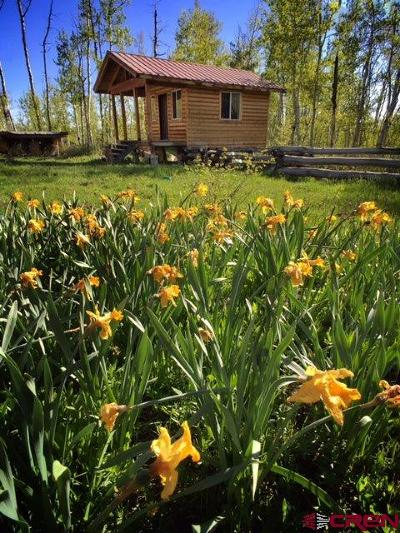 Mancos Single Family Home For Sale: 19900 Road 42
