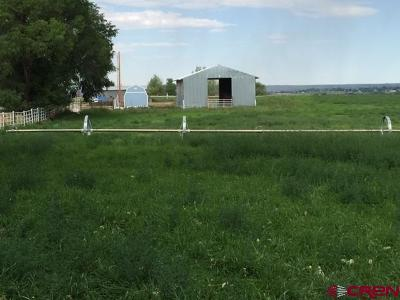 Montezuma Farm For Sale: Alamosa St Road L