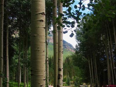 Durango Residential Lots & Land For Sale: 73 Wildrose Circle