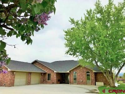 Montrose Single Family Home For Sale: 2360 Lost Ball Drive