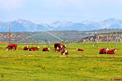 La Plata County Farm For Sale: 379 Cr 526