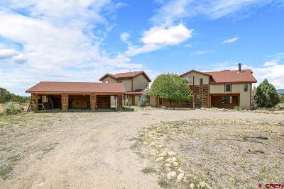 La Plata County Single Family Home For Sale: 601 Airport Road