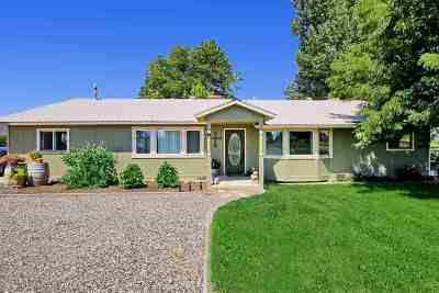 Fruita Single Family Home For Sale: 919 21 Road