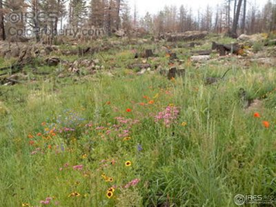 Bellvue CO Residential Lots & Land For Sale: $93,000