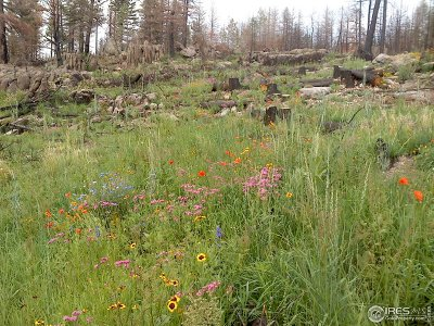 Bellvue CO Residential Lots & Land For Sale: $114,000