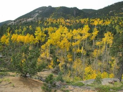 Manitou Springs Residential Lots & Land For Sale: 235 Waterfall Road